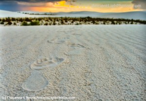 White Sands Footprints