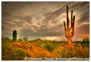 Sonoran Desert Summer